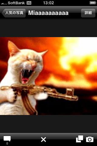 猫テロリスト